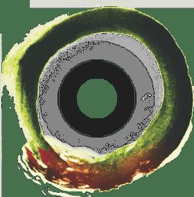 Organic vegan wines South Africa